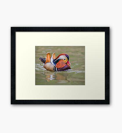 Mandarin Express Framed Print