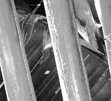 Stalks in Black & White by noriesworld