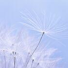 Dandelion Seed by Ellesscee