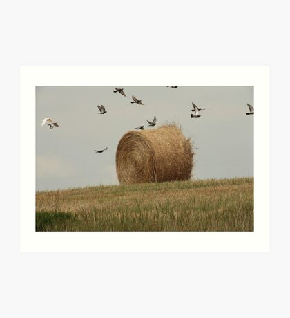 Hairy Hay Bale and Birds Art Print