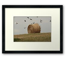 Hairy Hay Bale and Birds Framed Print