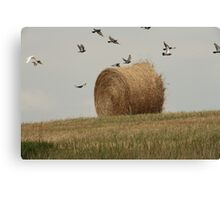 Hairy Hay Bale and Birds Canvas Print