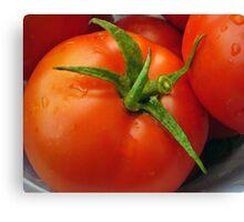 Ripe Tomatoes Canvas Print