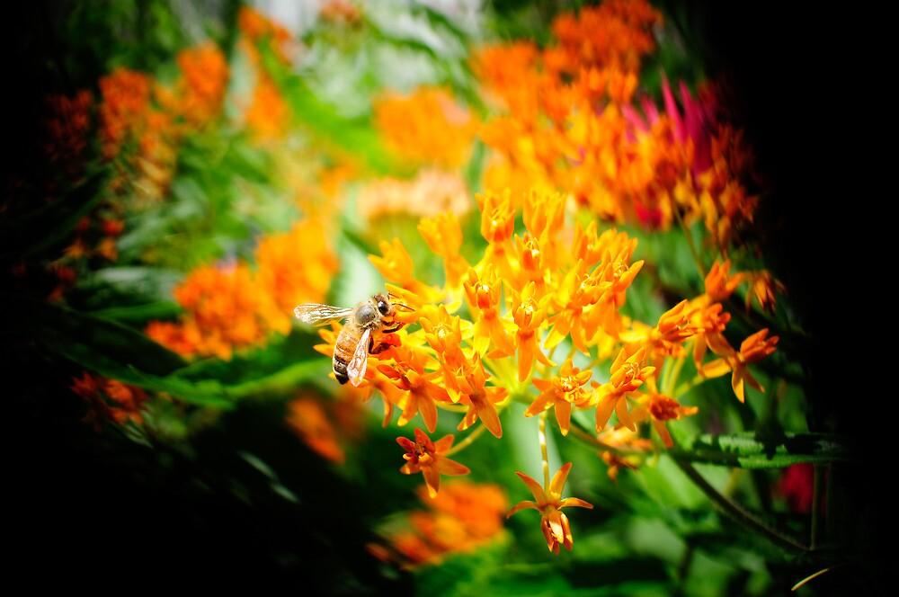 bumble bee by sarahschu