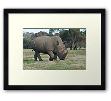 Rhino Ready To Charge Framed Print