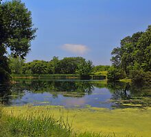 Shades of Blue and Green by Jim  Egner