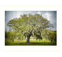 Mossy Oak of Jefferson Island Art Print