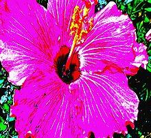 Purple Flower by Robert Zunikoff