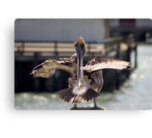 Pelican, San Francisco (2) Canvas Print
