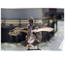 Pelican, San Francisco (2) Poster