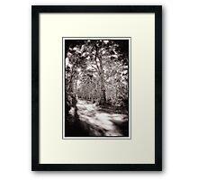 Forrest Track  Framed Print