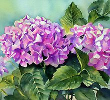 Pink Hydrangeas by Ann Mortimer