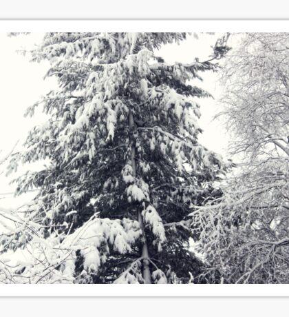 January Snowstorm Sticker