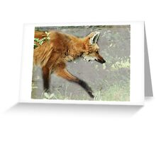 Red Maned Wolf  Greeting Card
