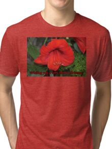 Merry Christmas Card-Amaryllis Tri-blend T-Shirt