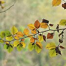 Autumn Leaves by rhian mountjoy