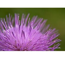 In the flower.. Photographic Print