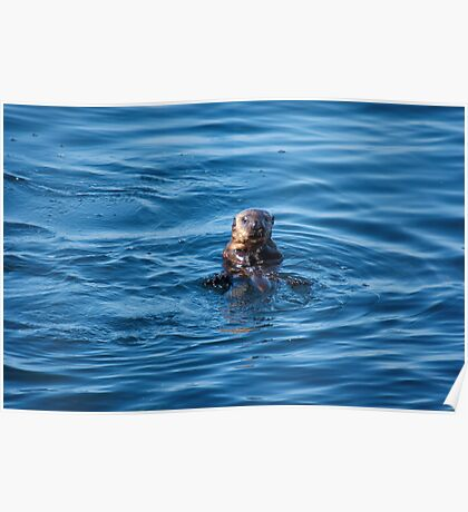 Eye Contact - Young Sea Otter Poster