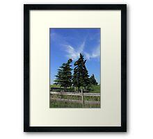 Two trees on the Alberta prairies Framed Print