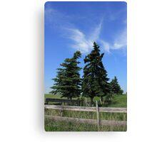 Two trees on the Alberta prairies Canvas Print