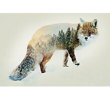 winter fox Photographic Print