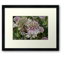 Honey Bee on Flower Framed Print