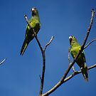Bird's Tree - Arbol De Pájaros by Bernhard Matejka