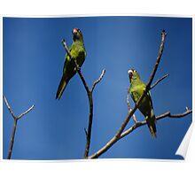 Bird's Tree - Arbol De Pájaros Poster