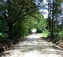 Looking Down a Country Road by EloiseArt