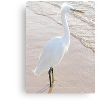 A heron looks out to sea. Canvas Print