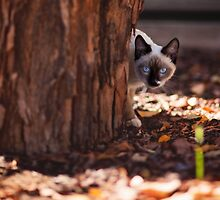 Blue eyed kitty by MarthaBurns
