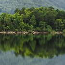 Thirlmere Reflections by Brian Kerr