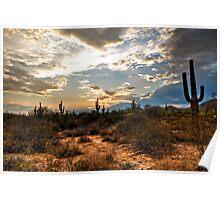 A Sonoran Desert Sunset  Poster