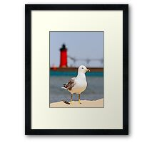 Seagull and South Haven, Michigan Lighthouse Framed Print