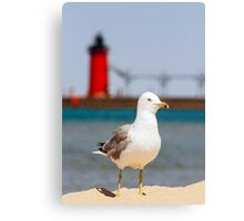 Seagull and South Haven, Michigan Lighthouse Canvas Print