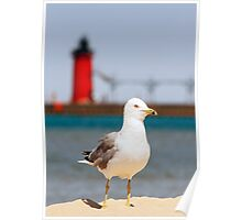 Seagull and South Haven, Michigan Lighthouse Poster