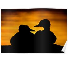 Hooded Merganser Sibling Pair Silhouette. Poster