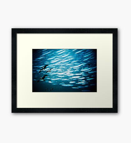 swimming with seagulls Framed Print