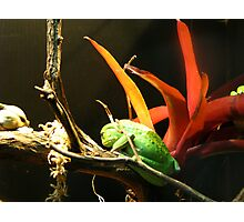 Despondent Frog Photographic Print