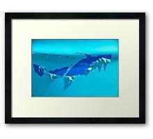 SHARK!! Framed Print