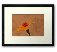 Tagettes Marigold Framed Print