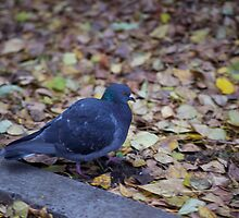 Autumn pigeon by MrTaskaev