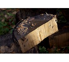 Just wood Photographic Print