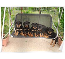 Six Rottweiler Puppies Lined Up On A Swing Poster
