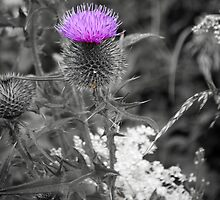 Thistle Do Nicely! by evisonphoto