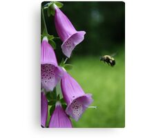 Pollinating the Fox Gloves Canvas Print
