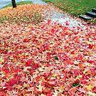 Suburban Autumn by Denice Breaux