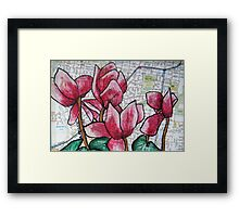 Cyclamen in the Suburbs Framed Print