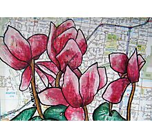 Cyclamen in the Suburbs Photographic Print