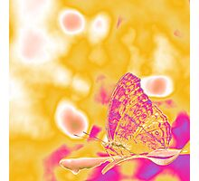 Pop Art Butterfly on leaf  Photographic Print